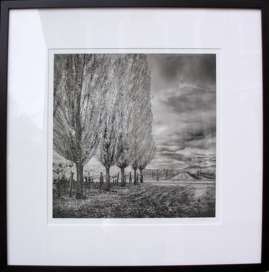 St. Helena #2 John Michiels photography, 25x25 framed  retail price $800 starting bid $270