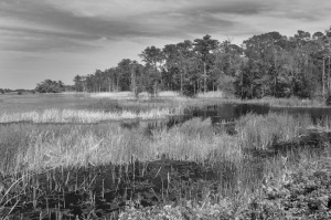 Santee Coastal III by Tripp Smith